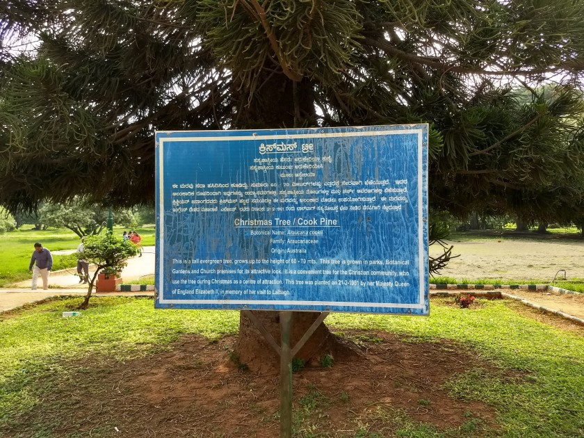 The sapling of this tree was planted by Queen Elizabeth